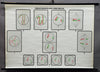 vintage wall chart picture poster reduction division meiosis biology genetics