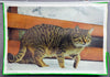 vintage pull-down wall chart picture poster animals domestic cat felis catus