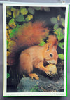 vintage poster rollable wall chart animals nut squirrel sciurus country style