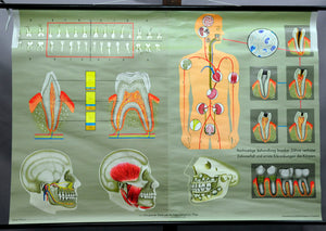 vintage pull down map human bite tooth care human body medicine