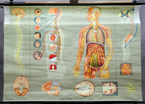 vintage pull down map human nervous system human body biology