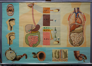 human body poster wall chart print digestive tract of food