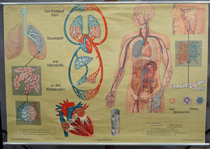 medical rollable poster wall chart print human body skin function