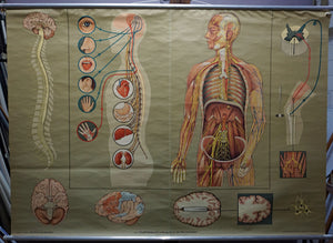 medical poster vintage wall chart sensation guidance by the nervous system