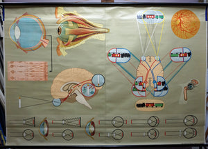 medical poster vintage rollable wall chart eye function
