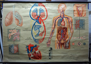 medical poster vintage rollable wall chart respiration blood circulation