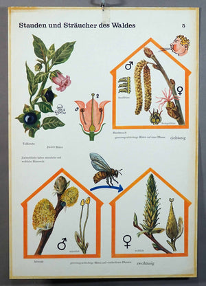 vintage poster retro wall chart shrubs bushes forest