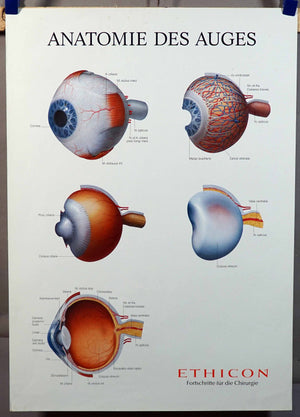 Medical poster print wall chart human eye science