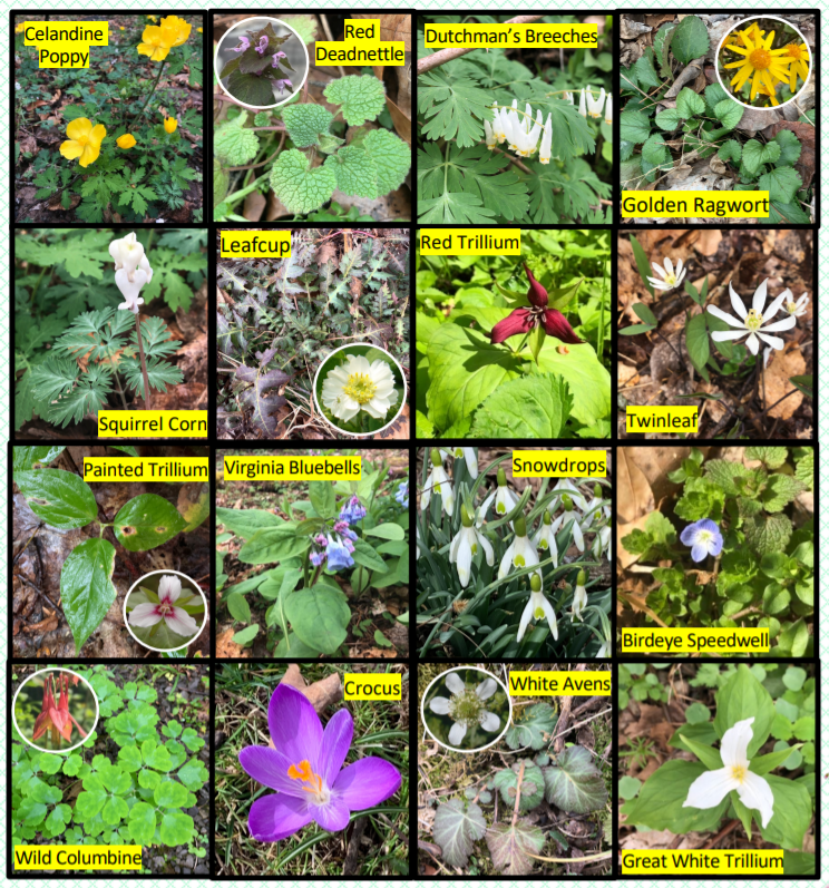 Spring Wildflower Bingo Card