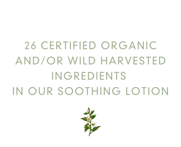 Organic Soothing Lotion