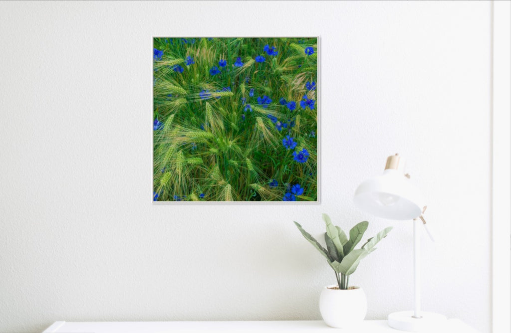 Alexander Palm Photography | Greenly Blue Square