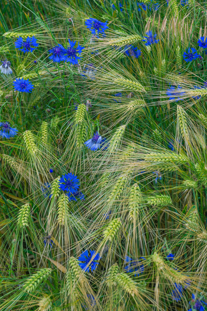 Greenly Blue  - Fotokunst - Fine Art Photography - Alexander-Palm.Photography