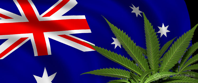 New Zeland Cannabis laws