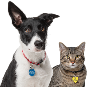Protect your pet with our Personalized ID Tags