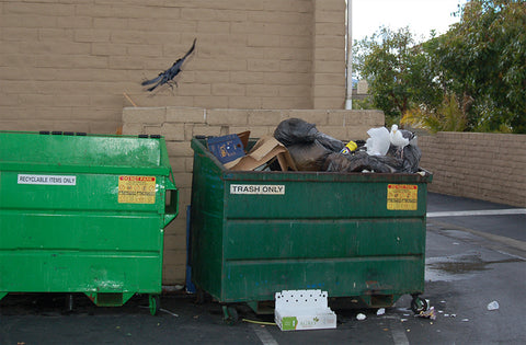 Dumpsters with open lids and overflowing garbage