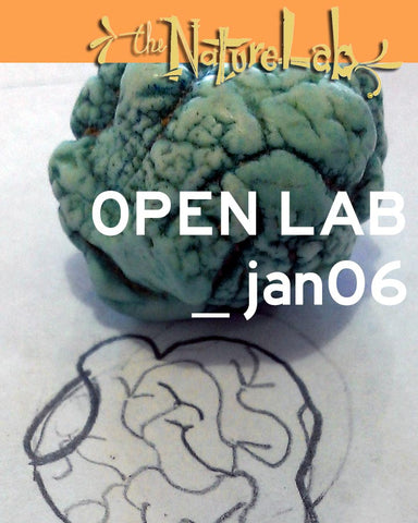 OPEN LAB _january