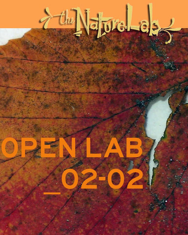 OPEN LAB  _February