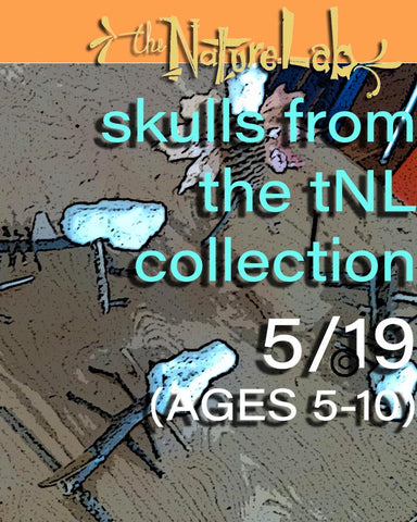 Skulls102 - from the tNL Collection (AGES 5-10)