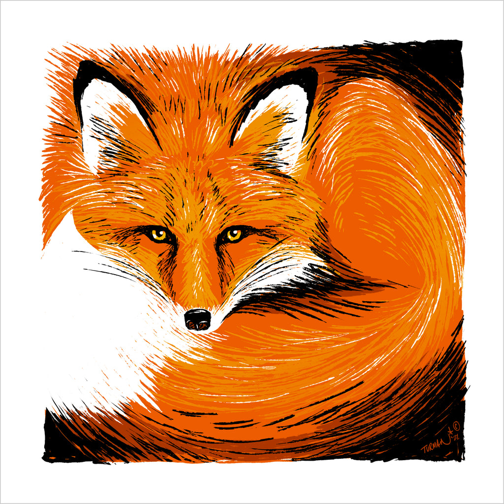 Curly - Red Fox