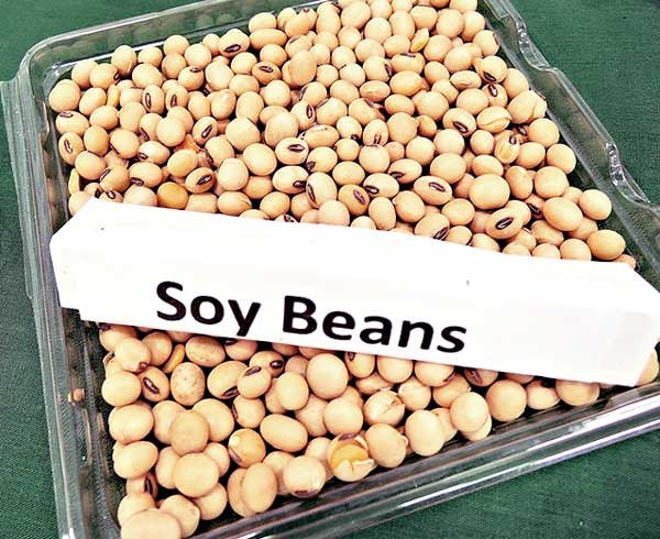 soybeans to eat