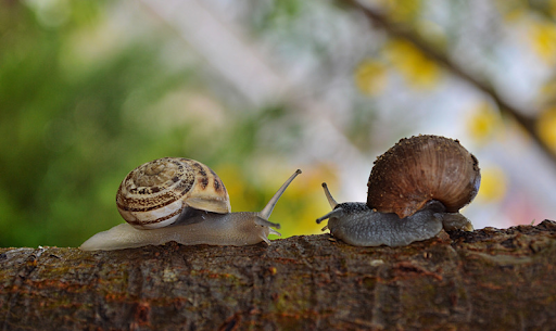 two snails facing each other