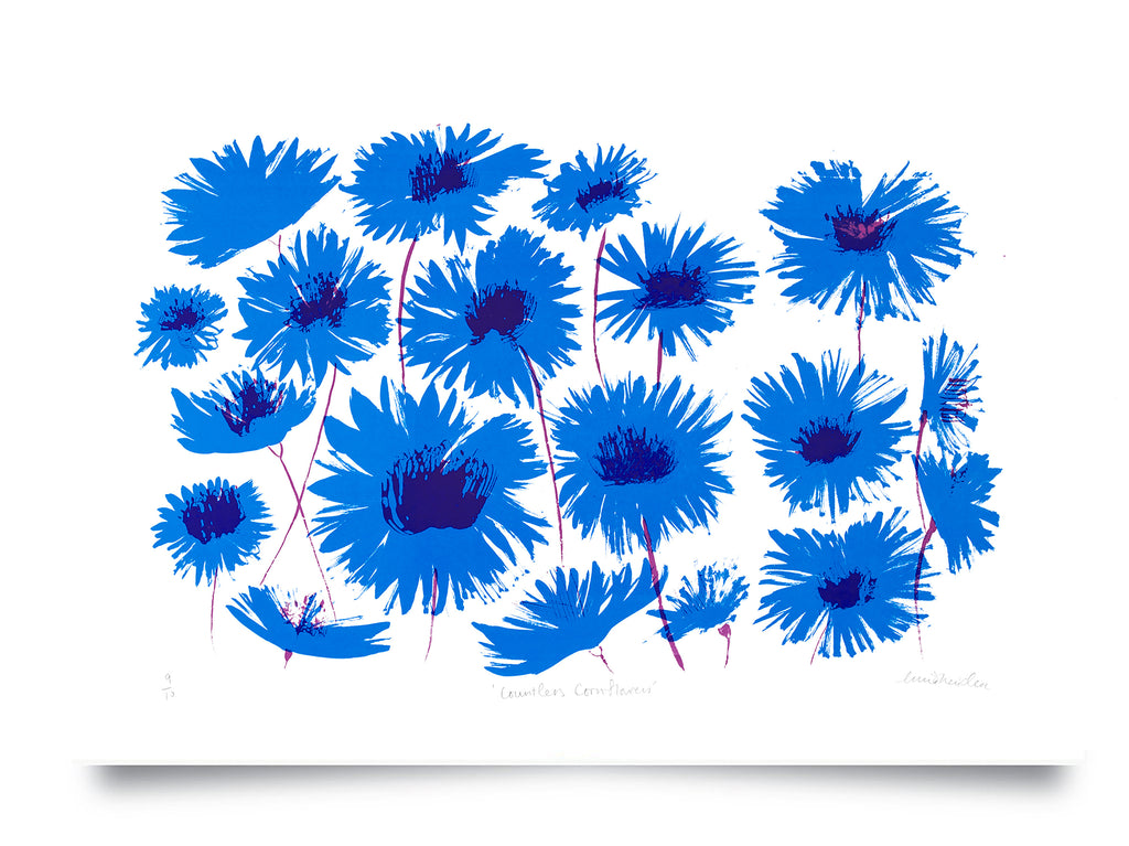 Countless Cornflowers