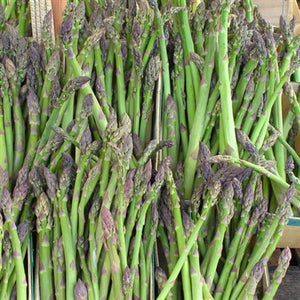 Asparagus hybrid Jersey Giant Asparagus image credit Walters Gardens Inc.
