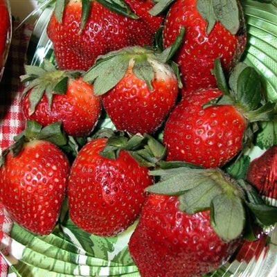 Fragaria hybrid Eversweet Strawberry
