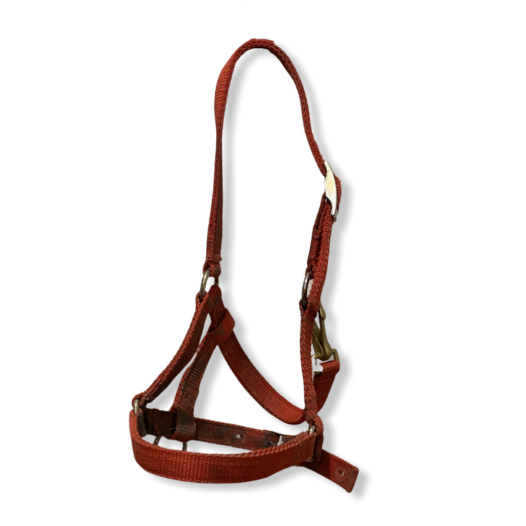 Red halter (pony/yearling)