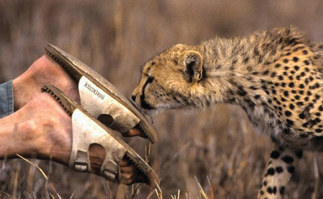 MATTO BARFUSS - ARTIST, WILDLIFE FILMMAKER, AND PART-TIME CHEETAH