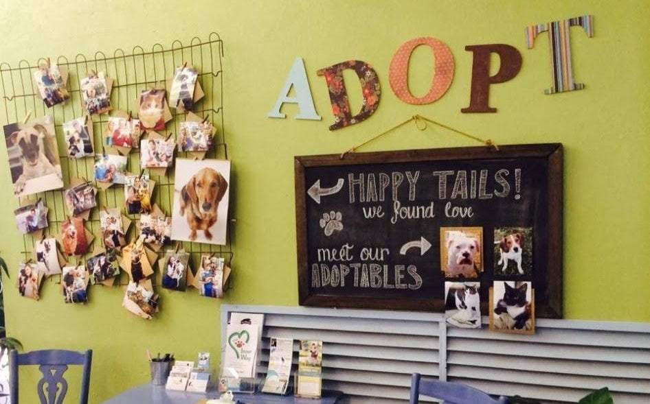 How Can Independent Pet Shops Compete with Big Box Stores? Here are 5 Ways