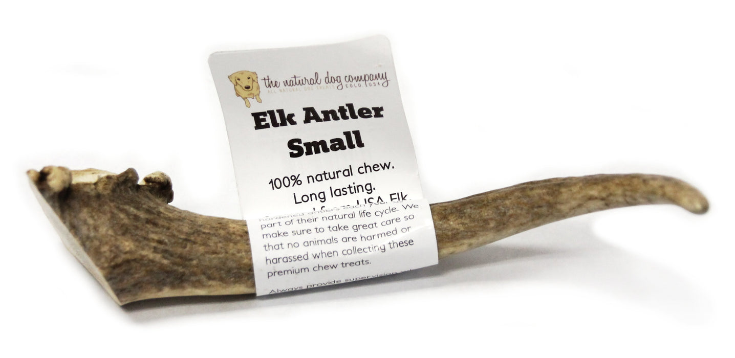 Elk Antler - Small Whole