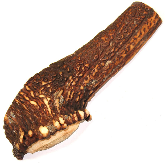 Royal Brown Deer Antler - Large Split