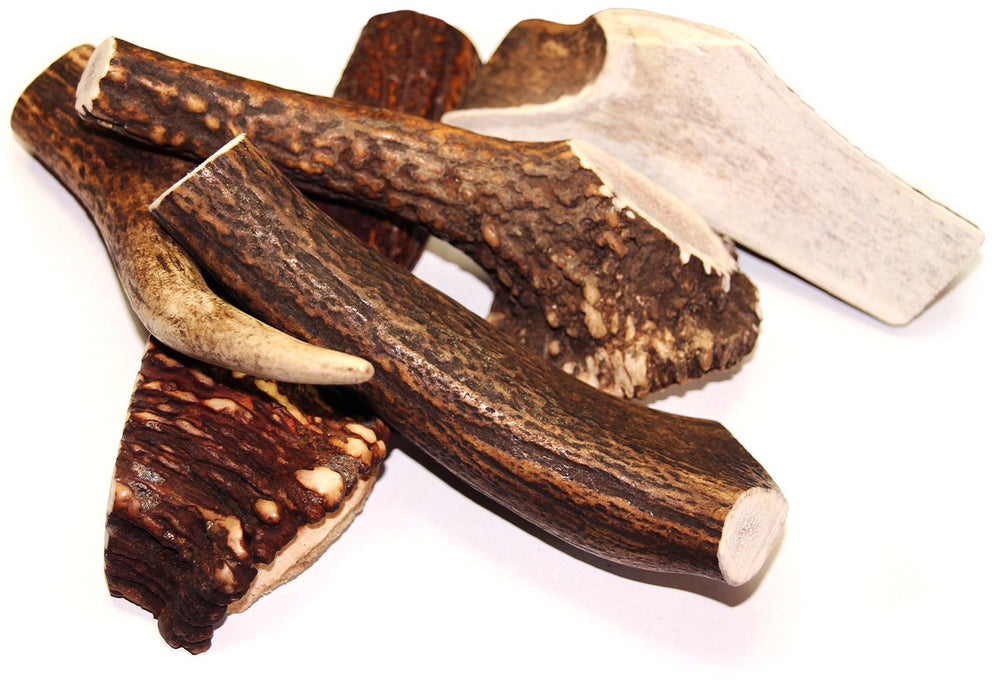 Royal Brown Deer Antler - Large Whole