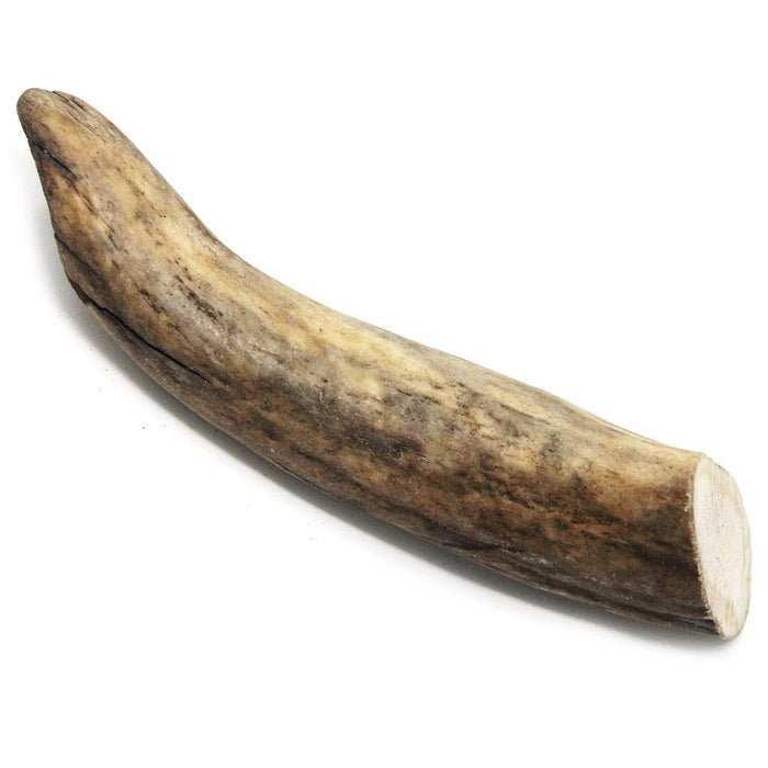 Moose Antler - Small