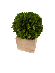 Faux Small Plant boxwood - rubyandcompanyqc