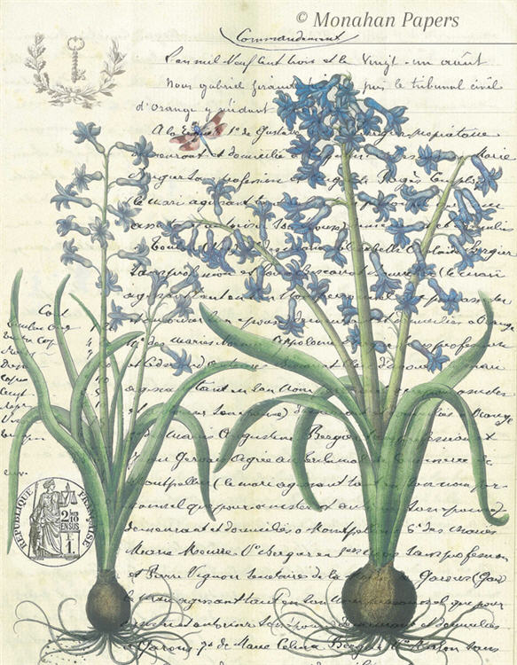 monahan papers bot54bb blue lily bulbs