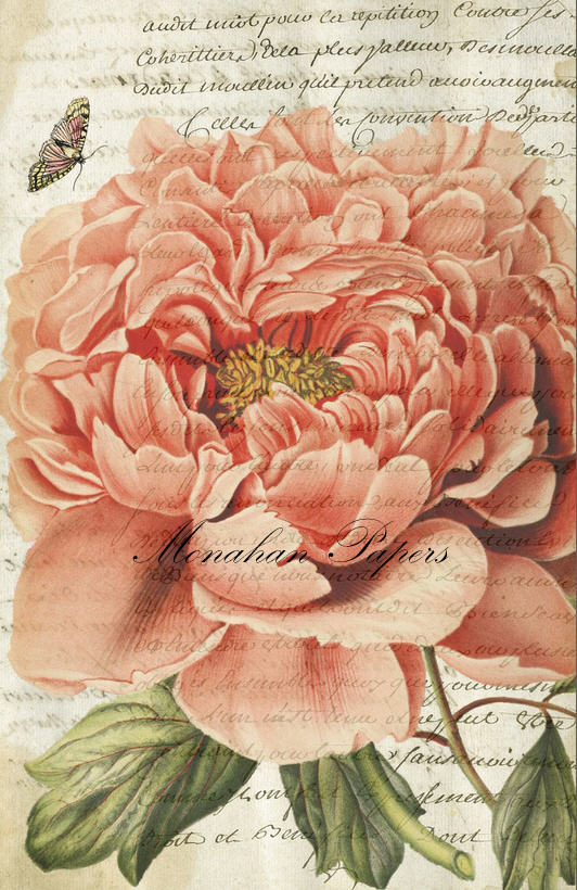 Botanical 38, large old pink rose