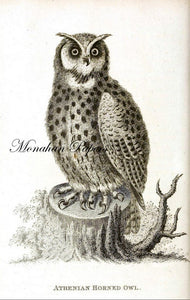 monahan papers H9b Athenian horned owl