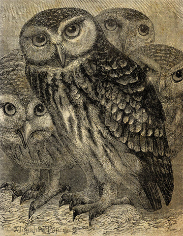 monahan papers X173bbb Gathering of Owls