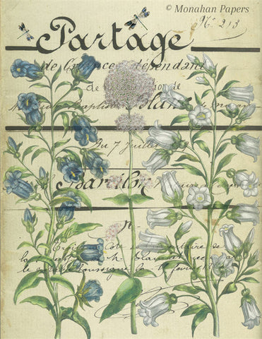 Botanical 52, blue and white campanula