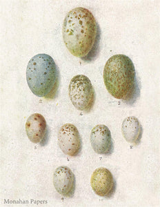 monahan paper E12bbb 10 small speckled eggs