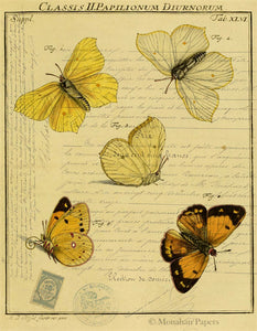 Monahan paper yellow butterfly collection