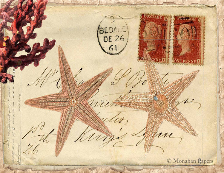 monahan paper x245bb two starfish