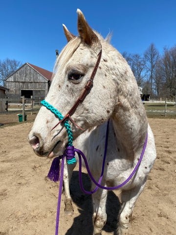 Hackamore & Leather Headstall Setup with Mecate Reins