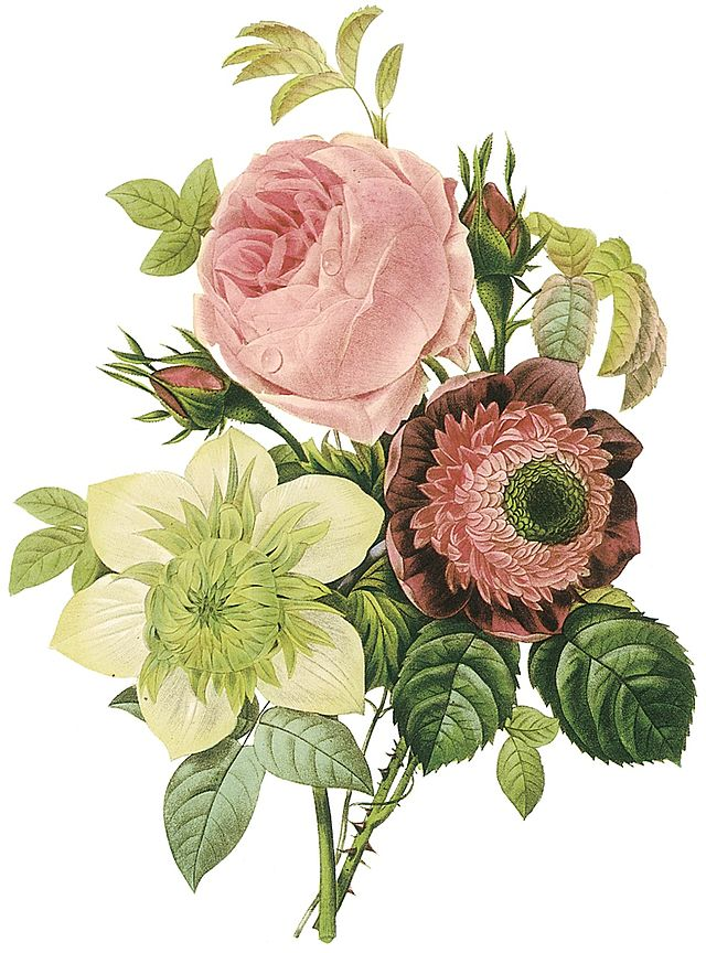 Flowers by the artist (Rosa centifolia, anemone, and clematis)