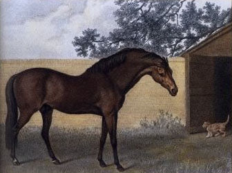 The Godolphin Arabian, painted by George Stubbs, some time before 1806.