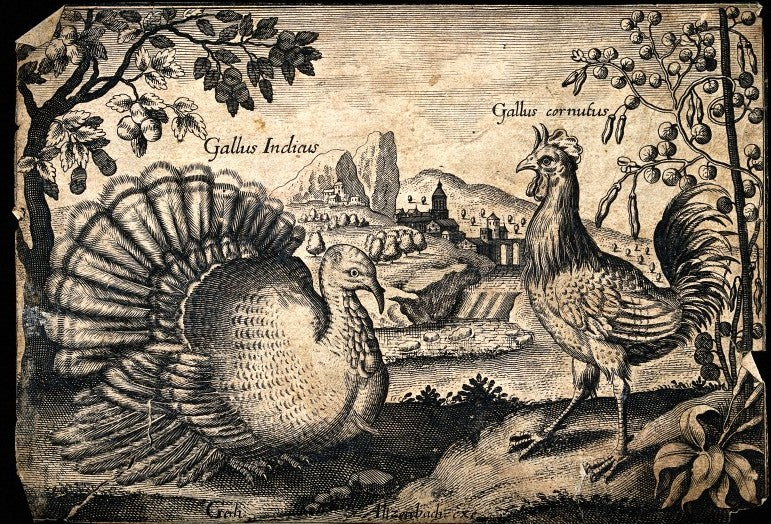 turkey-engraving