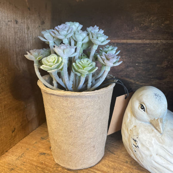 faux succulent in paper pot, sedum