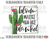 Cactus Sublimation Transfer, Bloom Where You Are Planted, Ready To Press, Heat Press Transfer, Sublimation Print